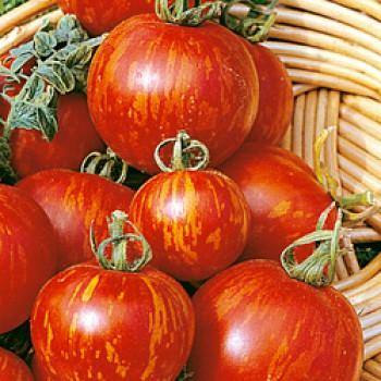 Tomato Tigerella