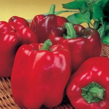 Asti rood