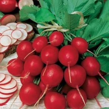 Radish Cherry Belle