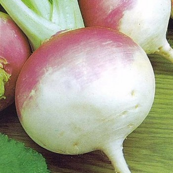 Turnip Purple top white globe