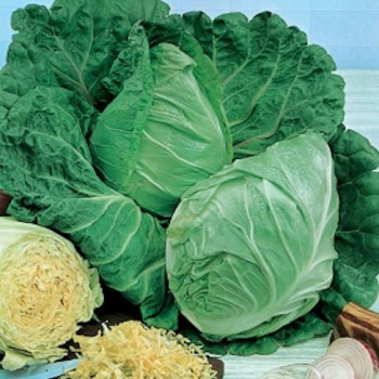 Oxheart Cabbage Ossenhart