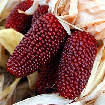 Sweetcorn Strawberry