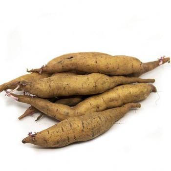 Zoete aardappel Tainung 65