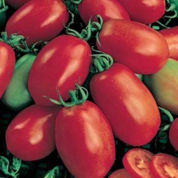 Plum tomato Roma VF