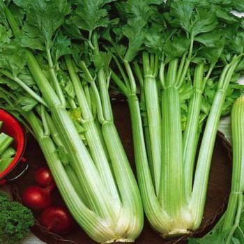 Celery Utah 52-70