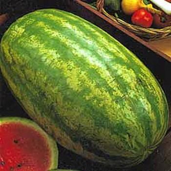 Watermelon Striped Klondike Blue Ribbon