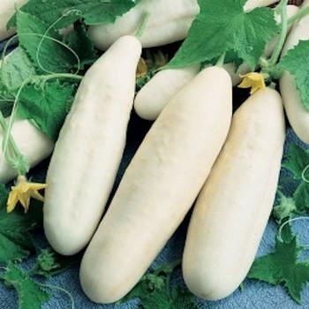 Cucumber White Wonder