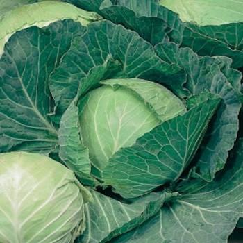White Cabbage Copenhagen Market