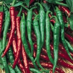 Hot pepper Cayenne Long Slim