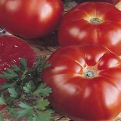 Beefsteak tomato Marmande