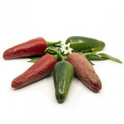 Hot pepper Jalapeno Jumbo