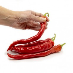Hot pepper Cayenne Large Thick