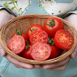 Cherry tomato 42 Days