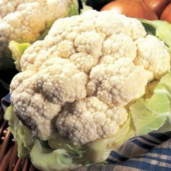 Cauliflower All Year Round