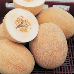 Melon Ananas d'Amerique