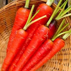 Carrot Atomic Red