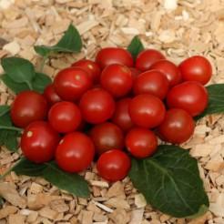 Container tomato Bajaja
