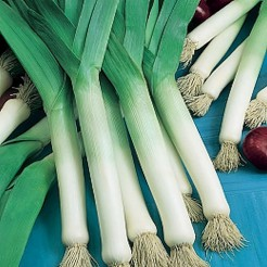 Summer leek Bulgarian Giant