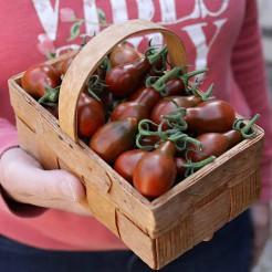 Pear tomato Cafe Bule