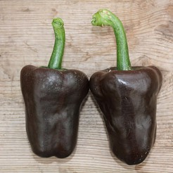 Hot pepper Chilhuacle Negro