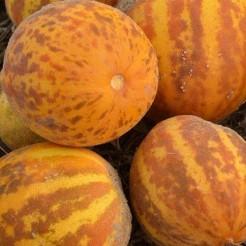 Melon Queen Anne's