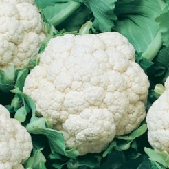 Cauliflower Giant de Naples (late)
