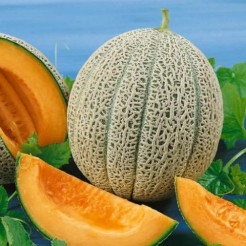 Meloen Hales Best Jumbo