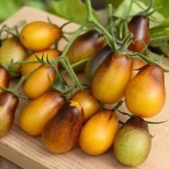 Cherry tomato Indigo Pear Drops