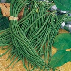 Garter bean Yard Long