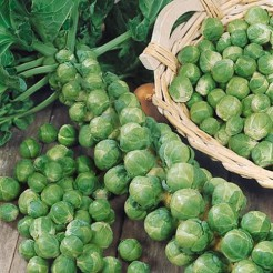 Brussel Sprouts Long Island Improved