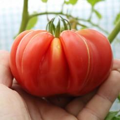 Beefsteak tomato Mushroom Basket