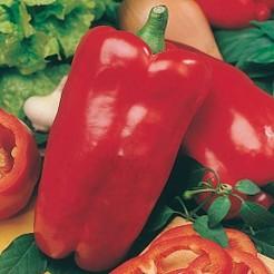 Sweet pepper Nocera Rosso