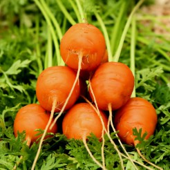Carrot Parisian Market 4