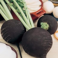 Black Radish round black