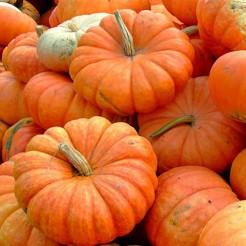 Pumpkin Rouge Vif D'Etampes (Cinderella)