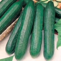 Cucumber Sensation