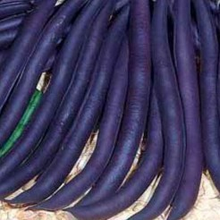 French Bean Purple Queen