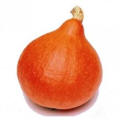 Pumpkin Uchiki Kuri