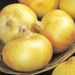 Onion Senshyu Yellow