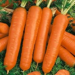 Carrot Touchon