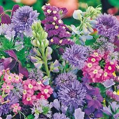 Summerflower mixture blue shades