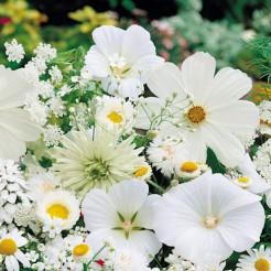 Summerflowers white